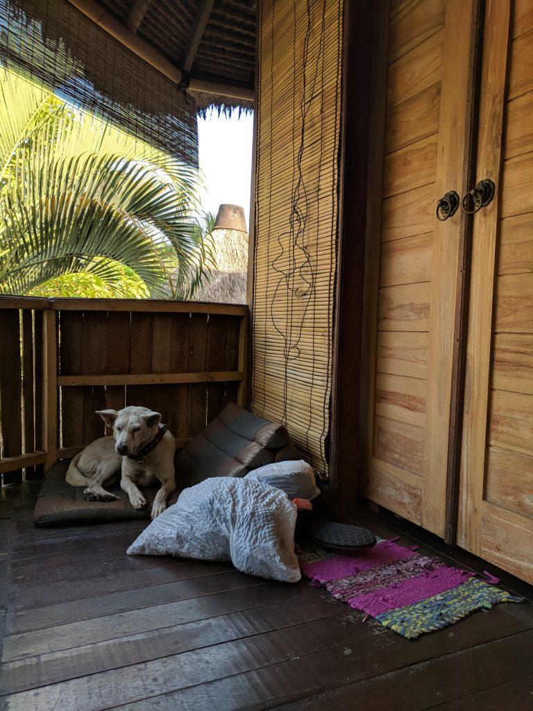 Airbnb Kemala Balinese Dog